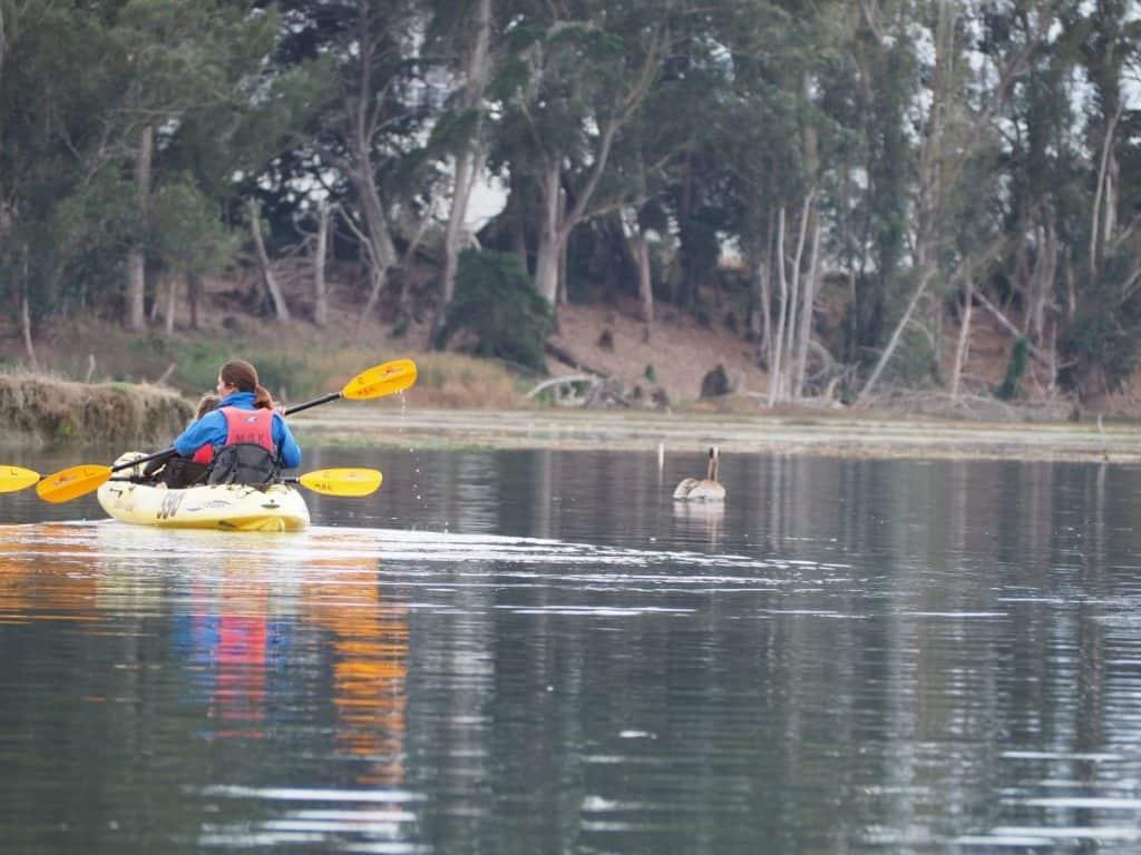 USA-roadtrip-elkhorn slough kayaking