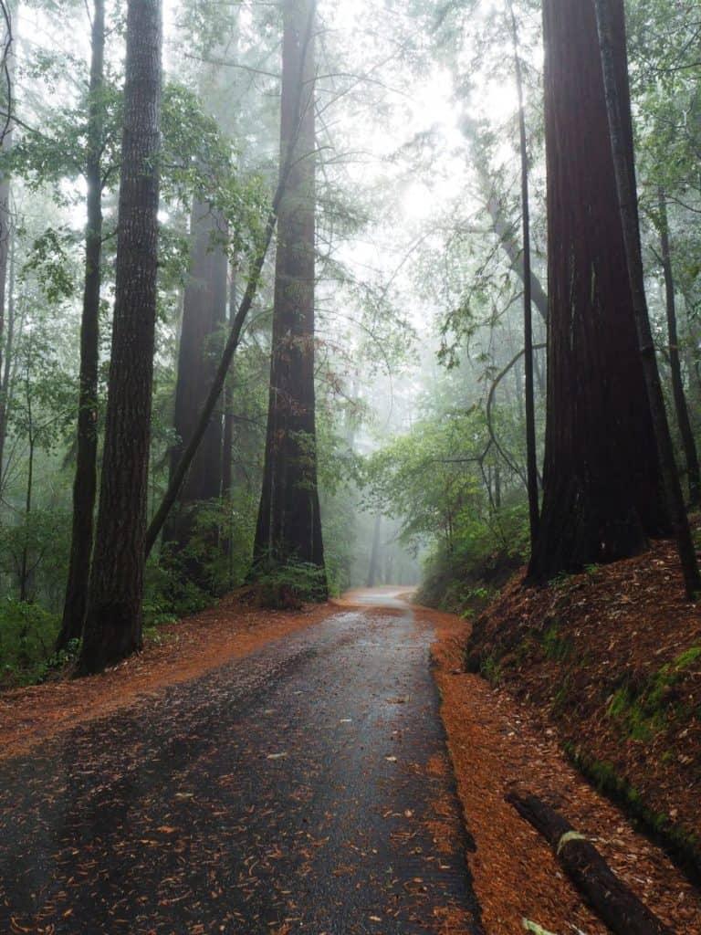 USA-roadtrip-bigbasin redwoord state park