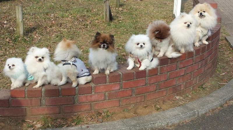 8 cute dogs on display in Yoyogi Park, Tokyo