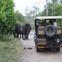 Trip Costs: How to go on safari in Botswana on a budget
