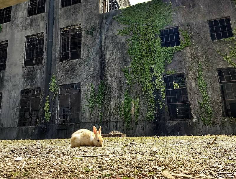 Japan bunny island - unique places to visit in Japan