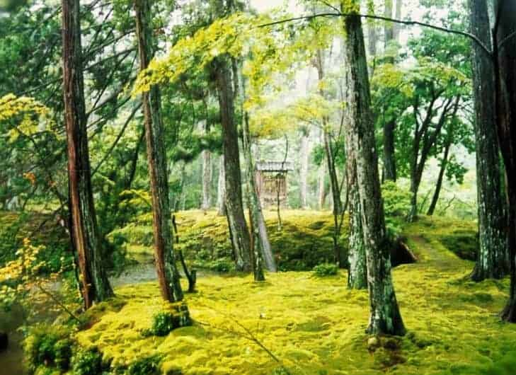 Moss Temple - top things to see and do in Japan