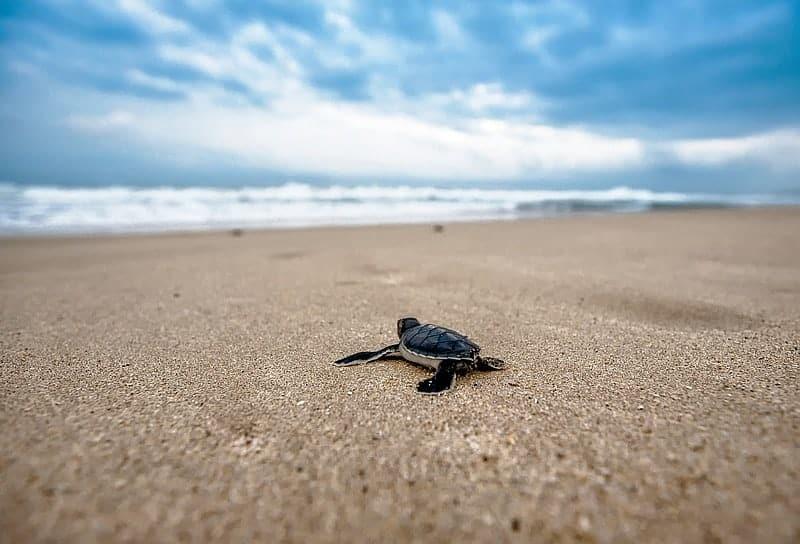 Turtle Hatchery hikkaduwa