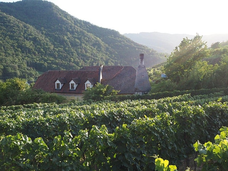 Vineyard and Guesthouse at sunset Wachau Valley