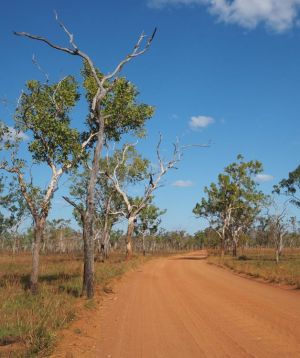 outback road with red dirt and blue sky.