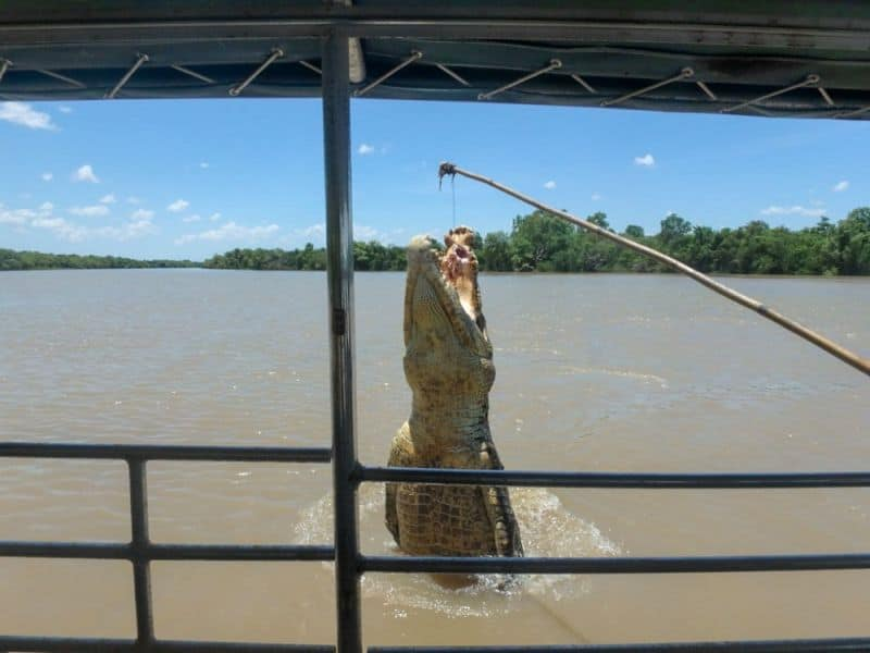 Jumping croc cruise on Adelaide River NT.